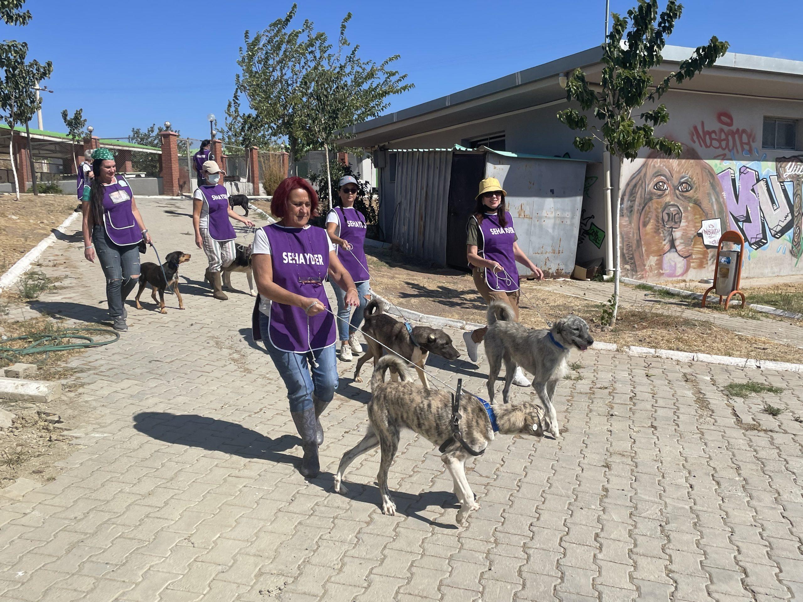 Dünya Hayvanları Koruma Günü'nde şefkatli etkinlik